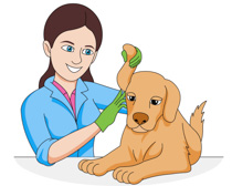 Veterinarian clipart. Search results for clip