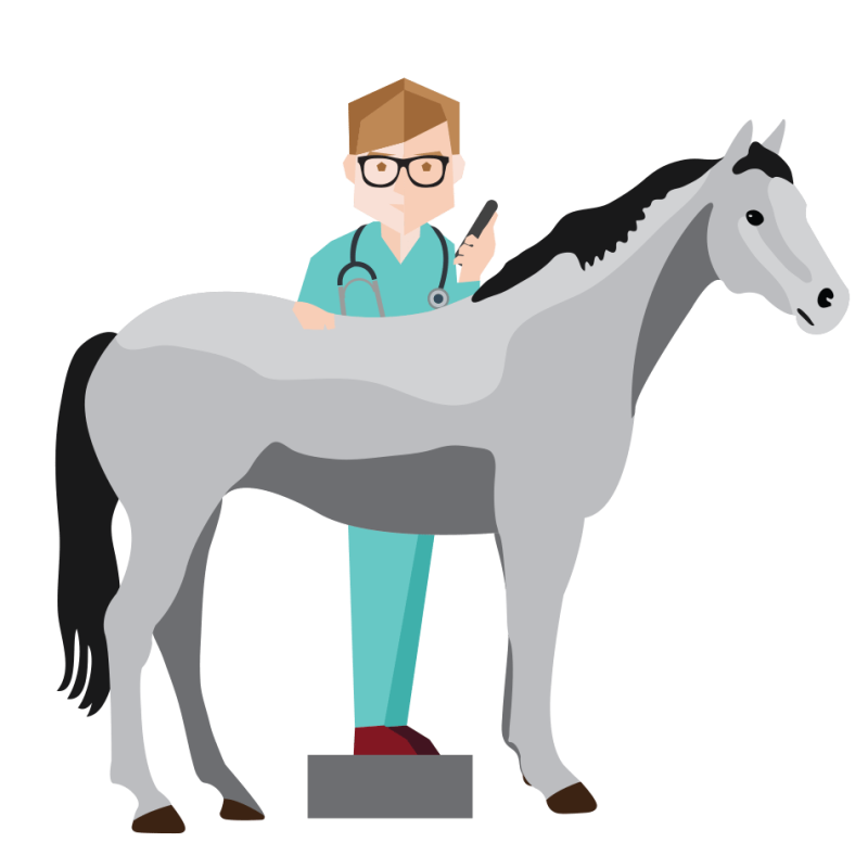 veterinarian clipart horse
