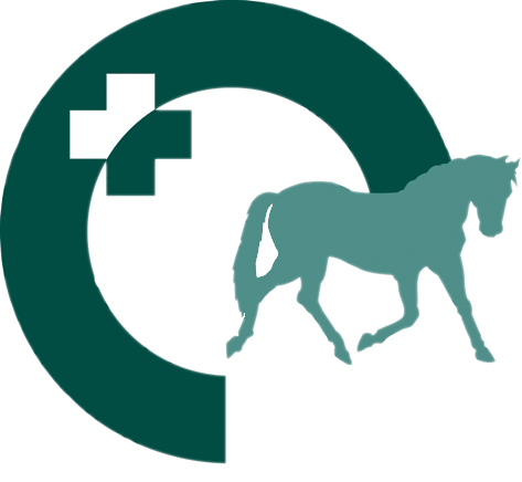 Free equine vet cliparts. Veterinarian clipart horse