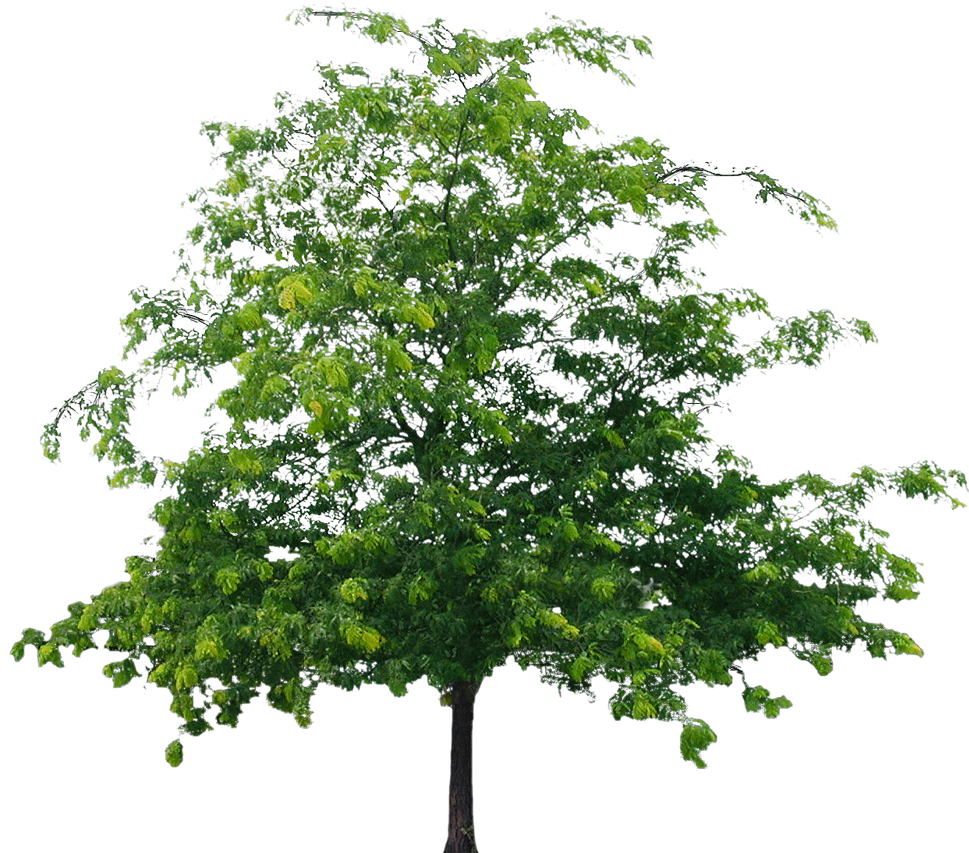 View png files. Tree images free icons