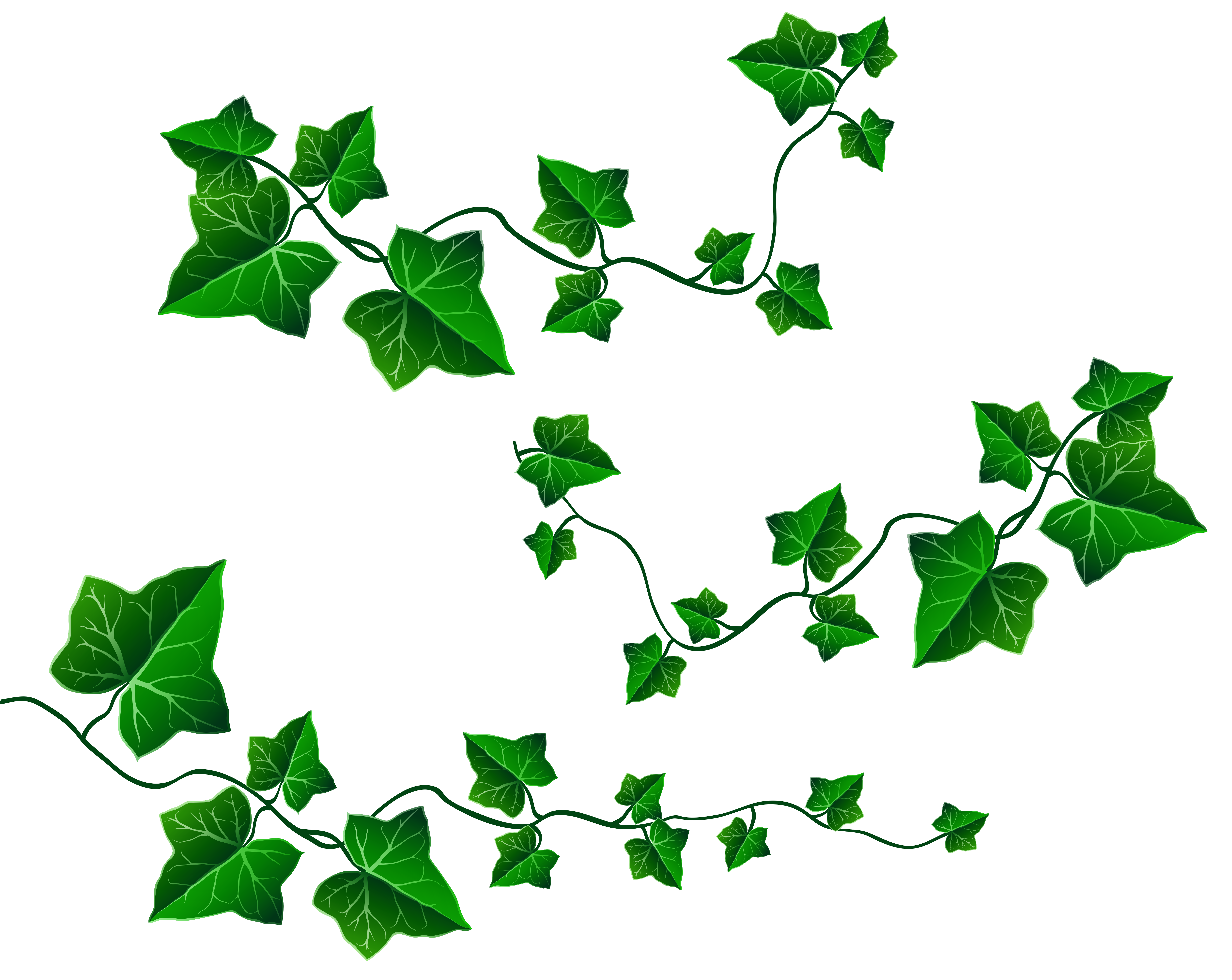 Vine decoration png picture. Clipart christmas leaves