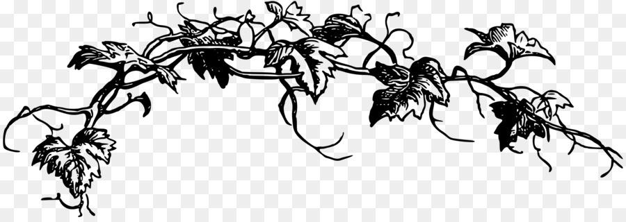 Vines clipart. Black and white vine