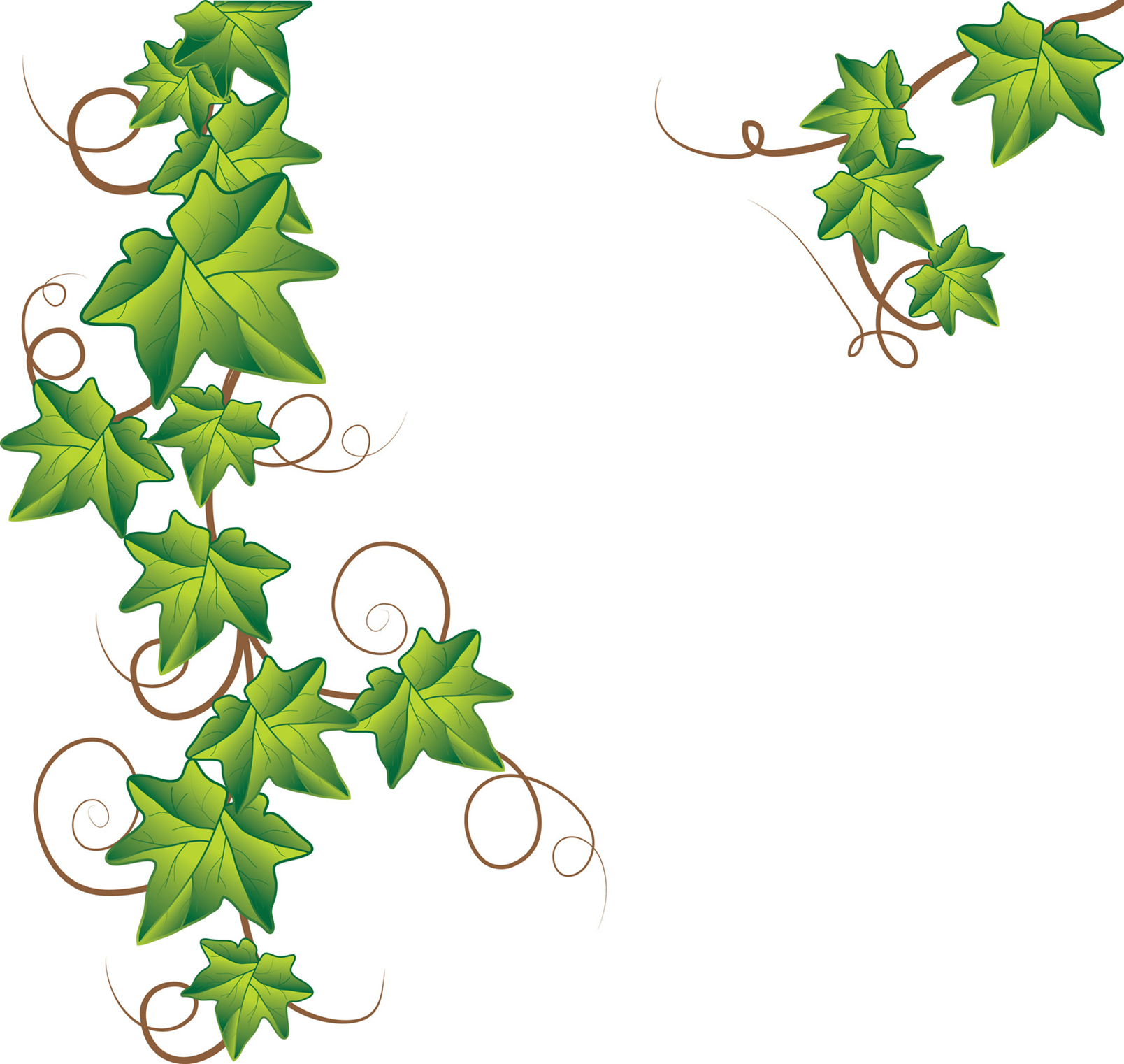 Vine tattoo designs image. Ivy clipart