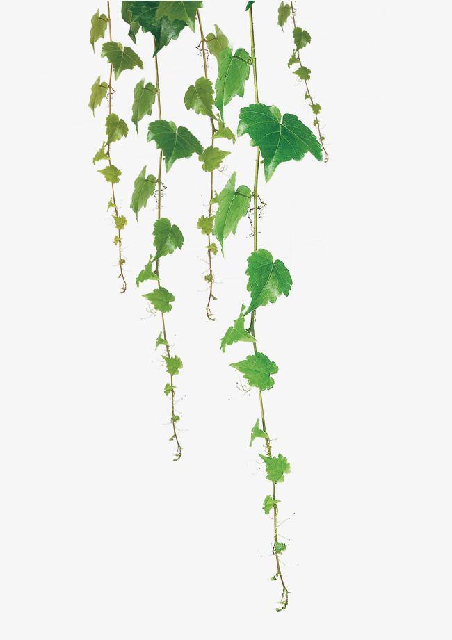 Vines clipart aesthetic. Green leaf vine hp