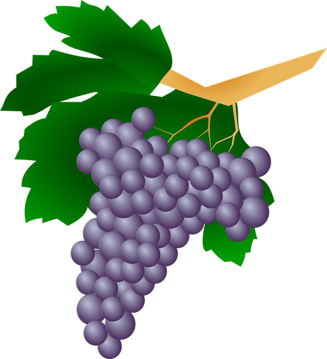 Grapes images shop of. Vines clipart animated