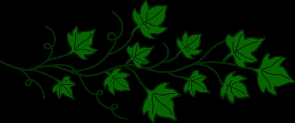 Vines clipart bird. Vine of ivy leaves