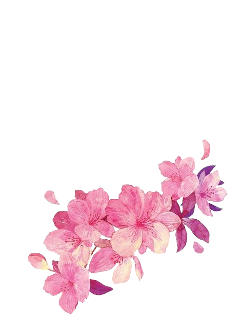 drawing chinese style. Vines clipart cherry blossom
