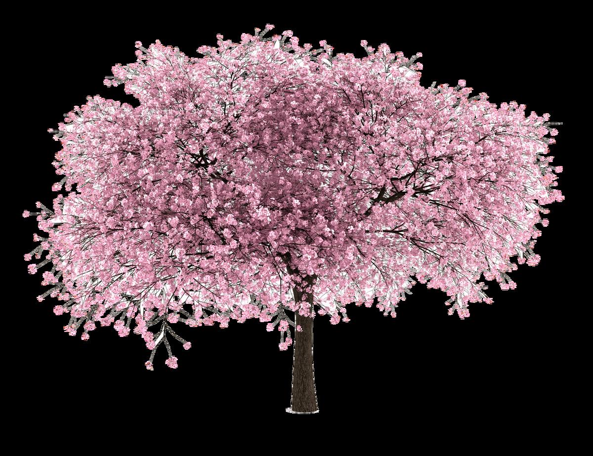 vines clipart cherry blossom