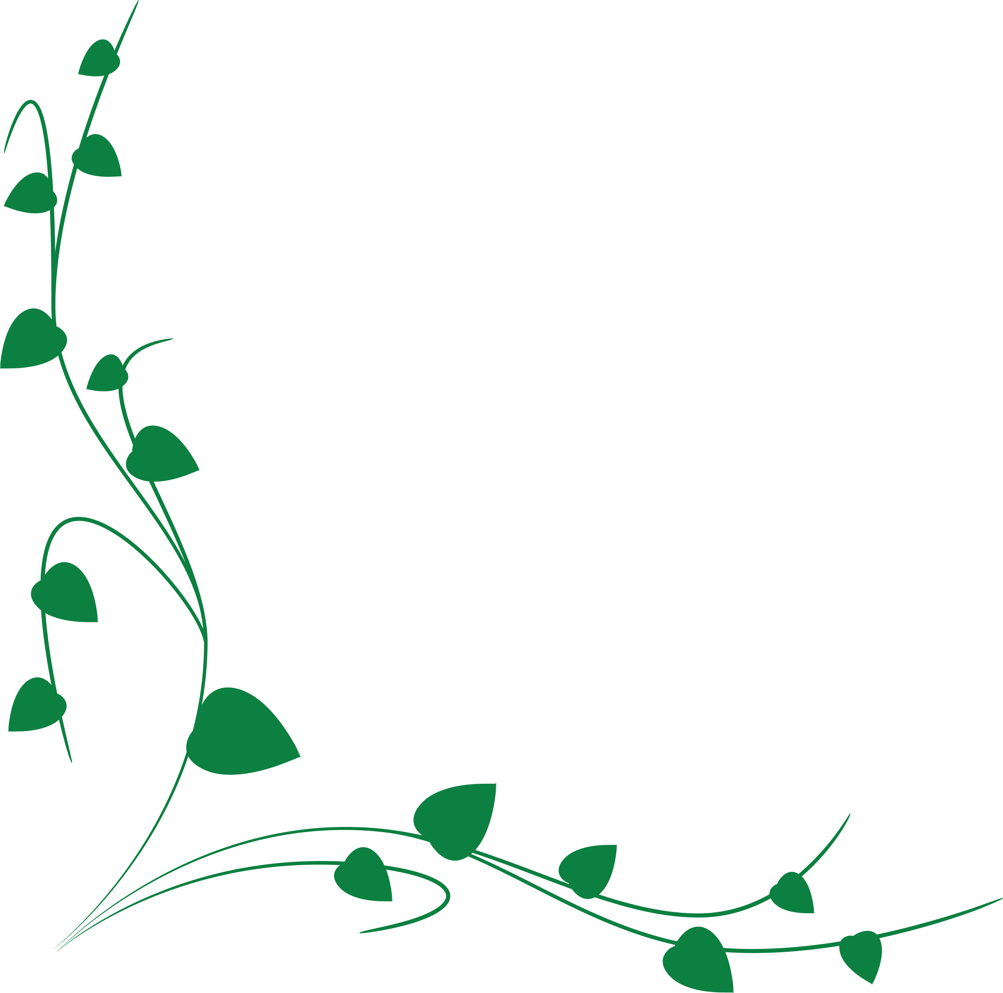 Curly vine free download. Vines clipart cute