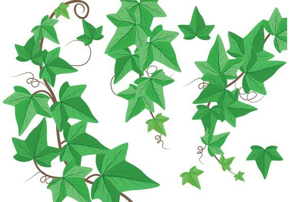 Vine clip art vectors. Vines clipart english ivy