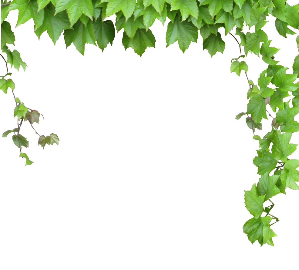 Vine computer leaves and. Vines clipart file