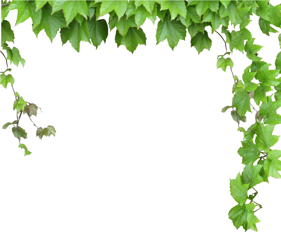 Vines clipart leafy vine. Computer leaves and png