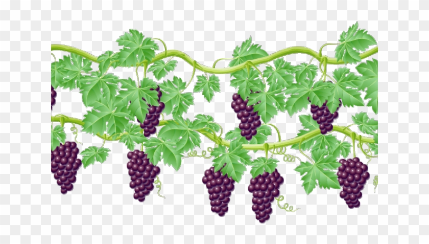 Vine grape clip art. Vines clipart raspberry