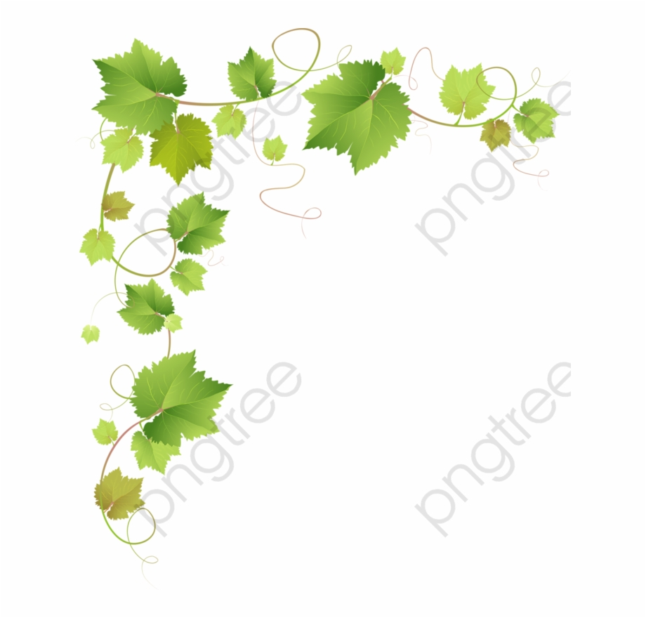 Green ivy branches grape. Vines clipart vine leaves