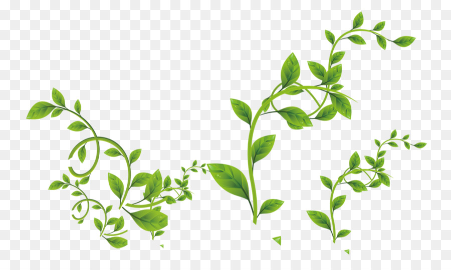 Green leaf png download. Vines clipart watercolor