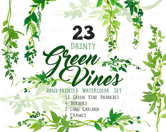 Digital green clip art. Vines clipart watercolor