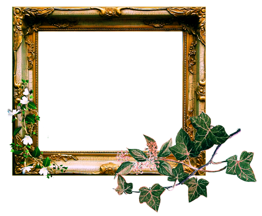 Ornate by sophia t. Vintage picture frame png