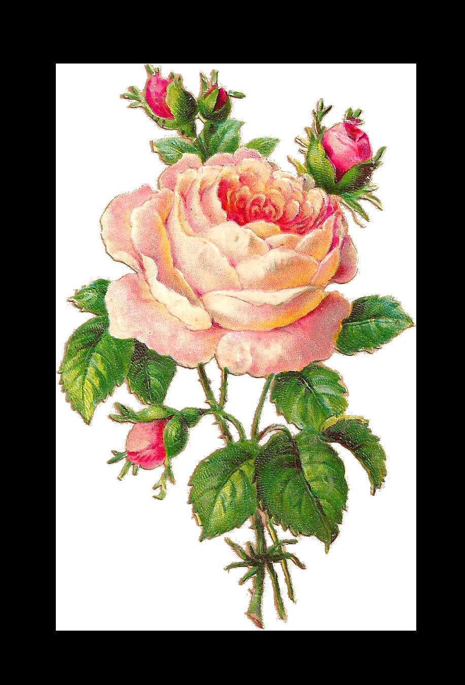 Beautiful flowers . Flower vintage png