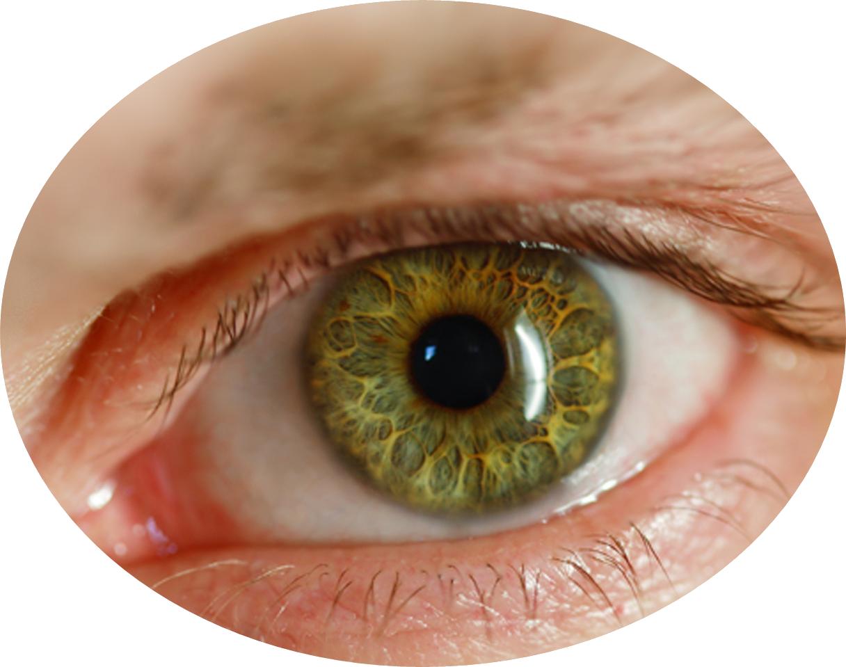 Png image purepng free. Vision clipart human eye