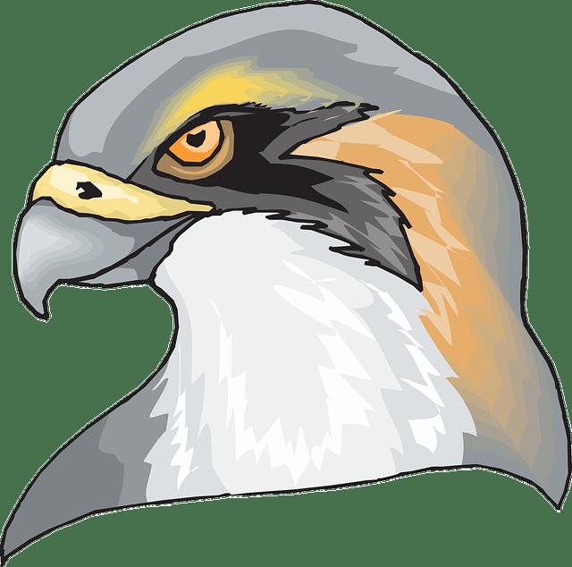 Volleyball clipart falcon. Activity schedule northwest public