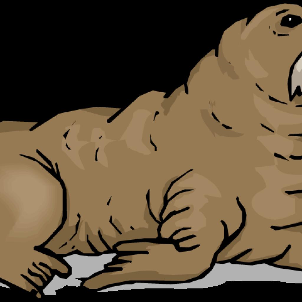 Walrus clipart. Dinosaur hatenylo com panda