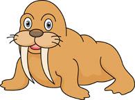 Walrus clipart. Search results for clip