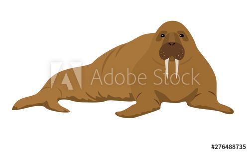 Walrus clipart animal sea nz. Cartoon vector illustration on