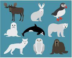 Animals clip art polar. Walrus clipart arctic tundra
