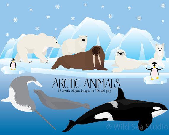 Walrus clipart arctic tundra. Picture
