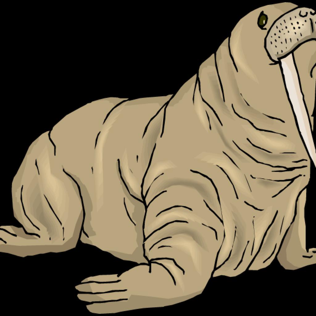 Dinosaur hatenylo com top. Walrus clipart brown
