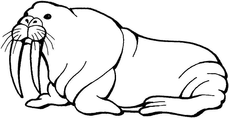 Walrus clipart brown. Head cartoon svg clip