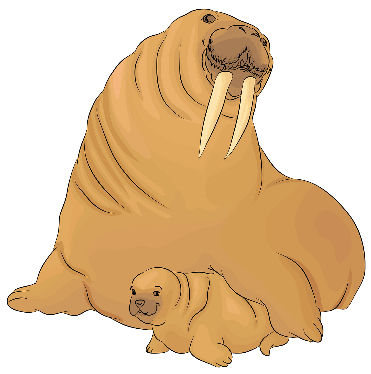 Walrus clipart christmas. With a baby free
