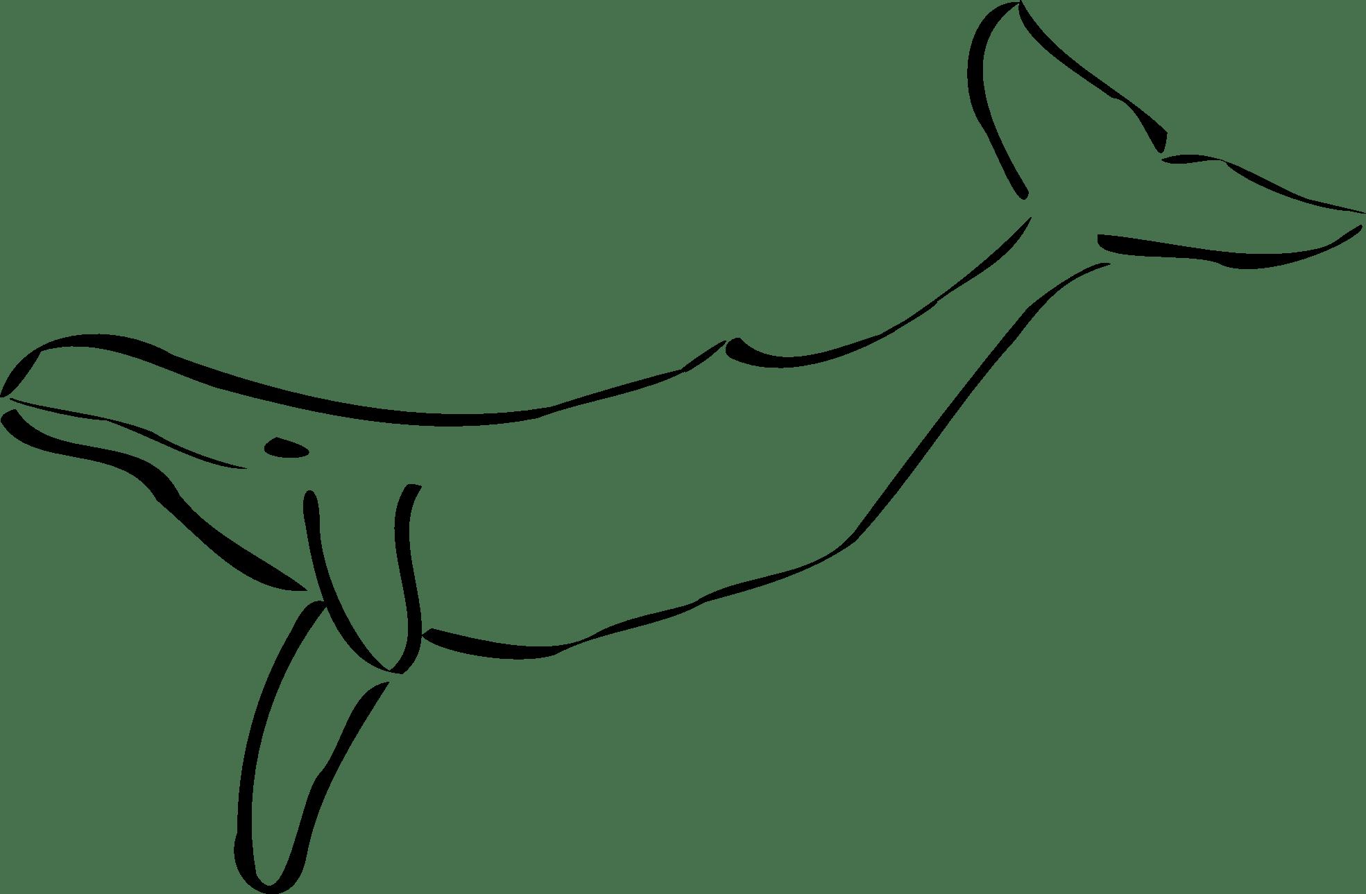 Pages democraciaejustica . Walrus clipart coloring page