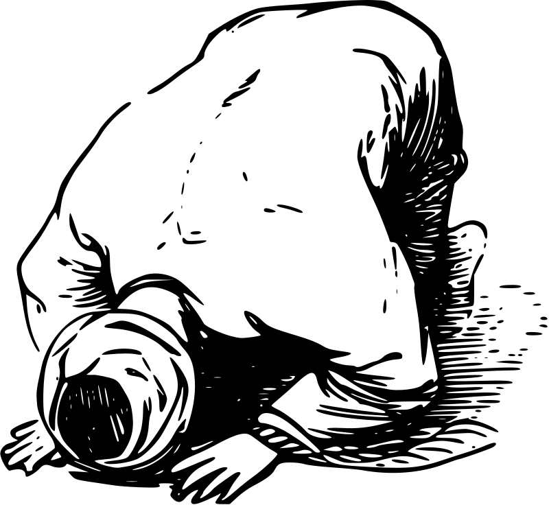 Walrus clipart drawing. Salaat medium image png