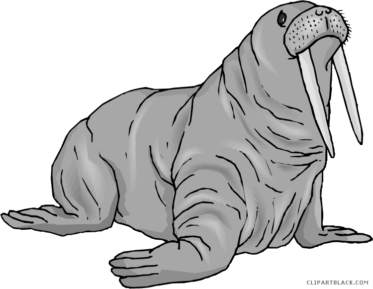 Walrus clipart drawing. Page of clipartblack com