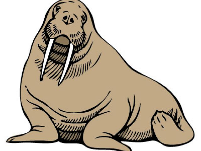 Walrus clipart grey thing. Free download clip art