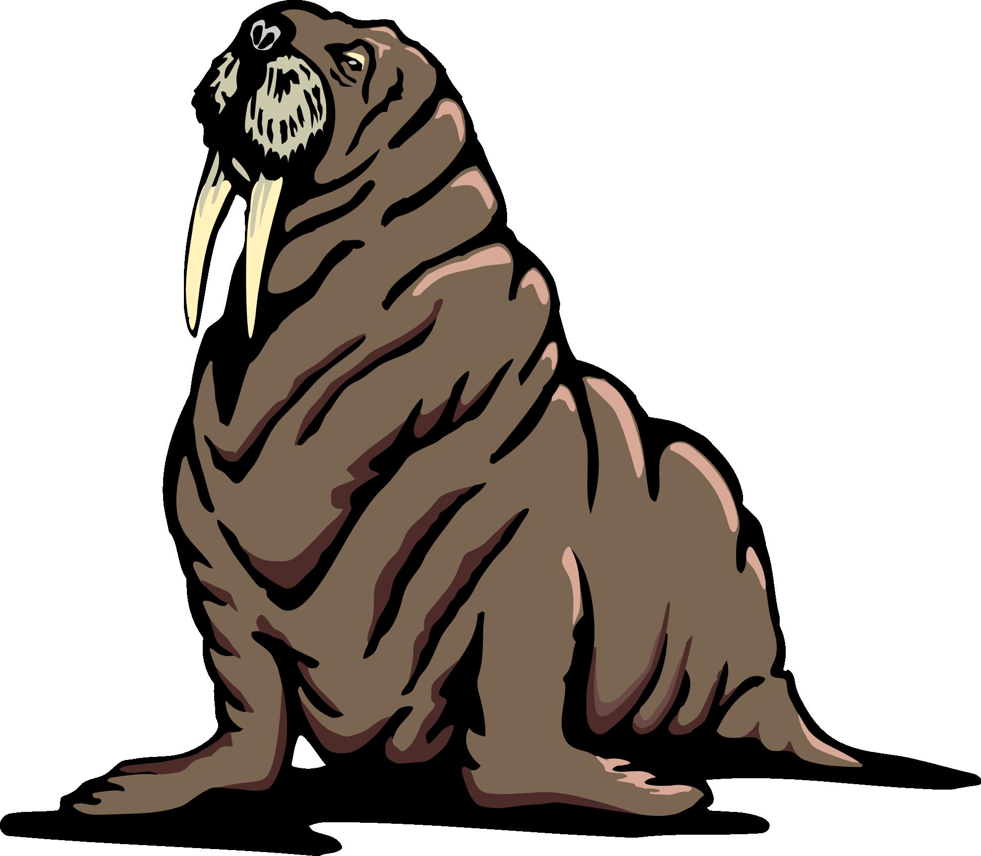 Transparent png mart. Walrus clipart object