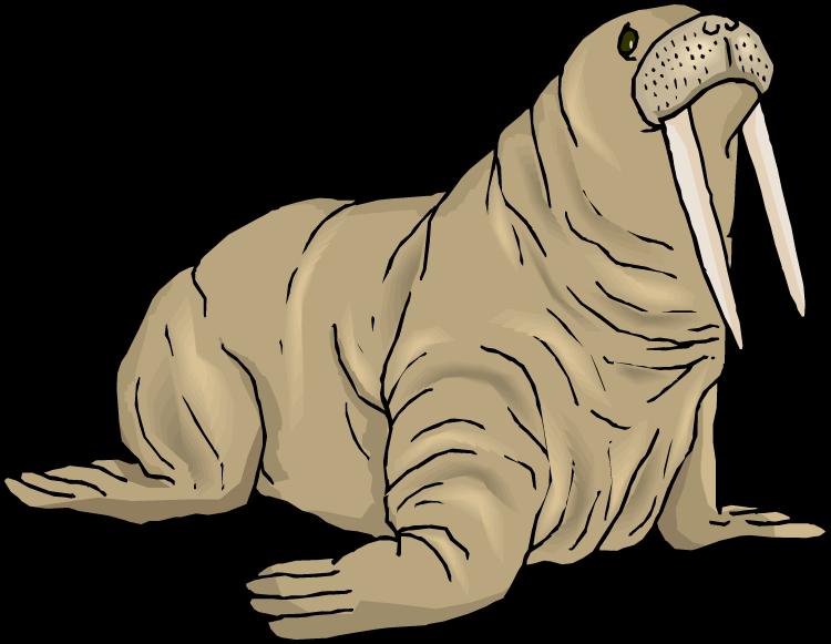 Walrus clipart sea lion. Forgetmenot animals seals walruses
