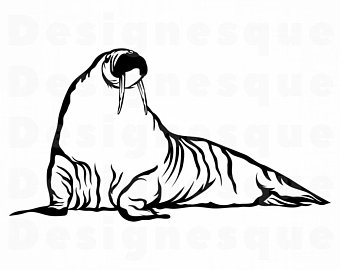 Etsy . Walrus clipart svg
