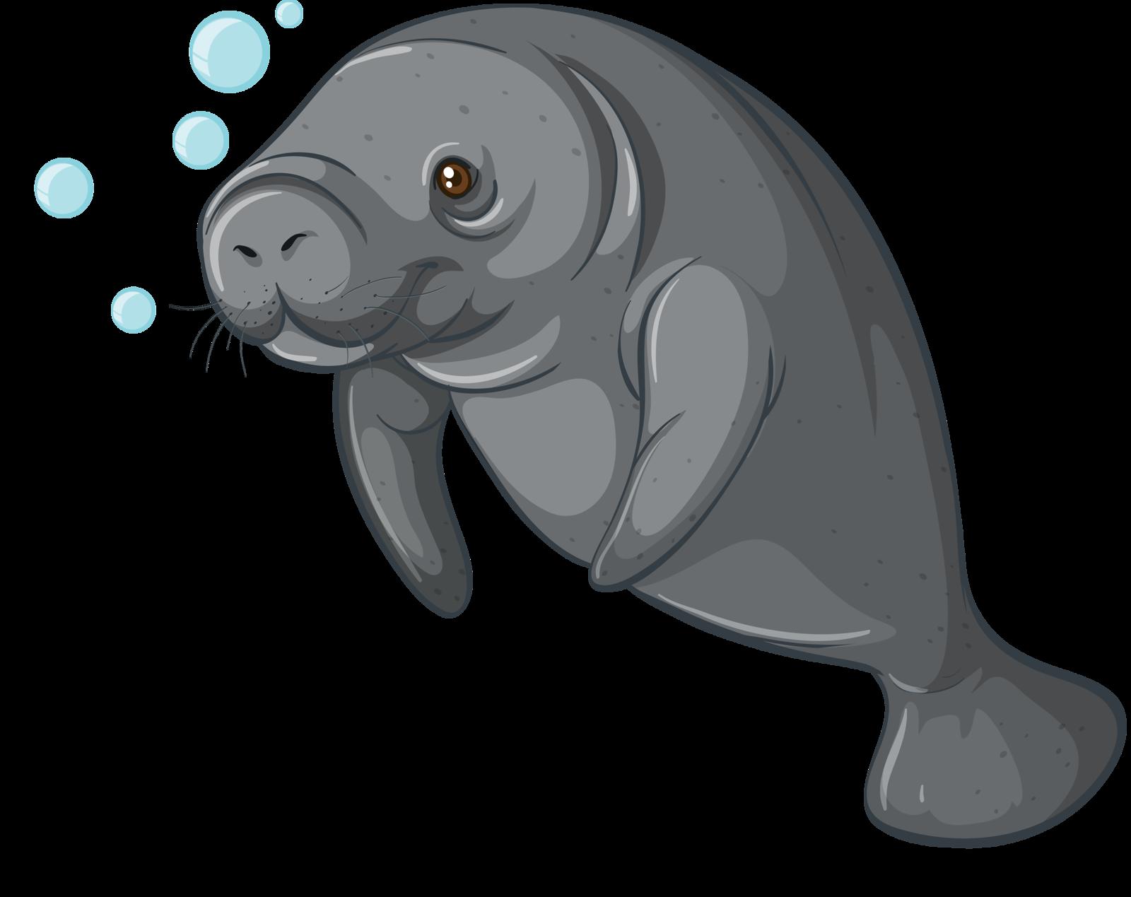 Walrus clipart transparent background sea creature.  png album