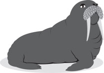 Search results for clip. Walrus clipart tusk
