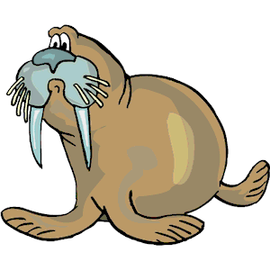 Walrus clipart vector. Cliparts of free download