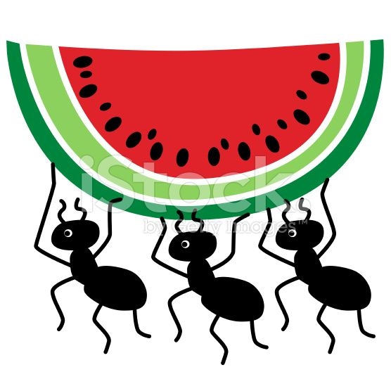 A vector illustration of. Watermelon clipart ant