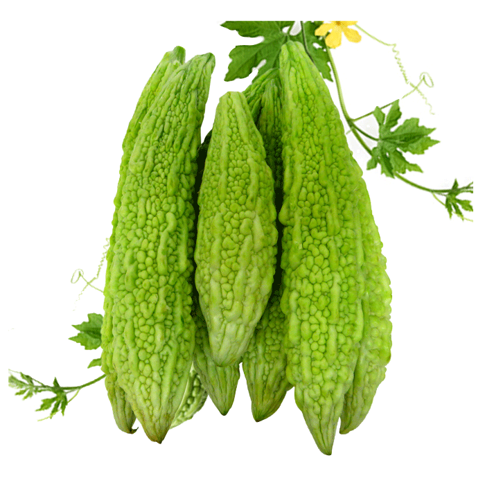 Watermelon clipart bitter gourd. Green fresh
