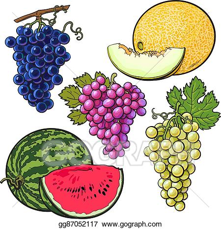 Vector illustration collection of. Watermelon clipart grape
