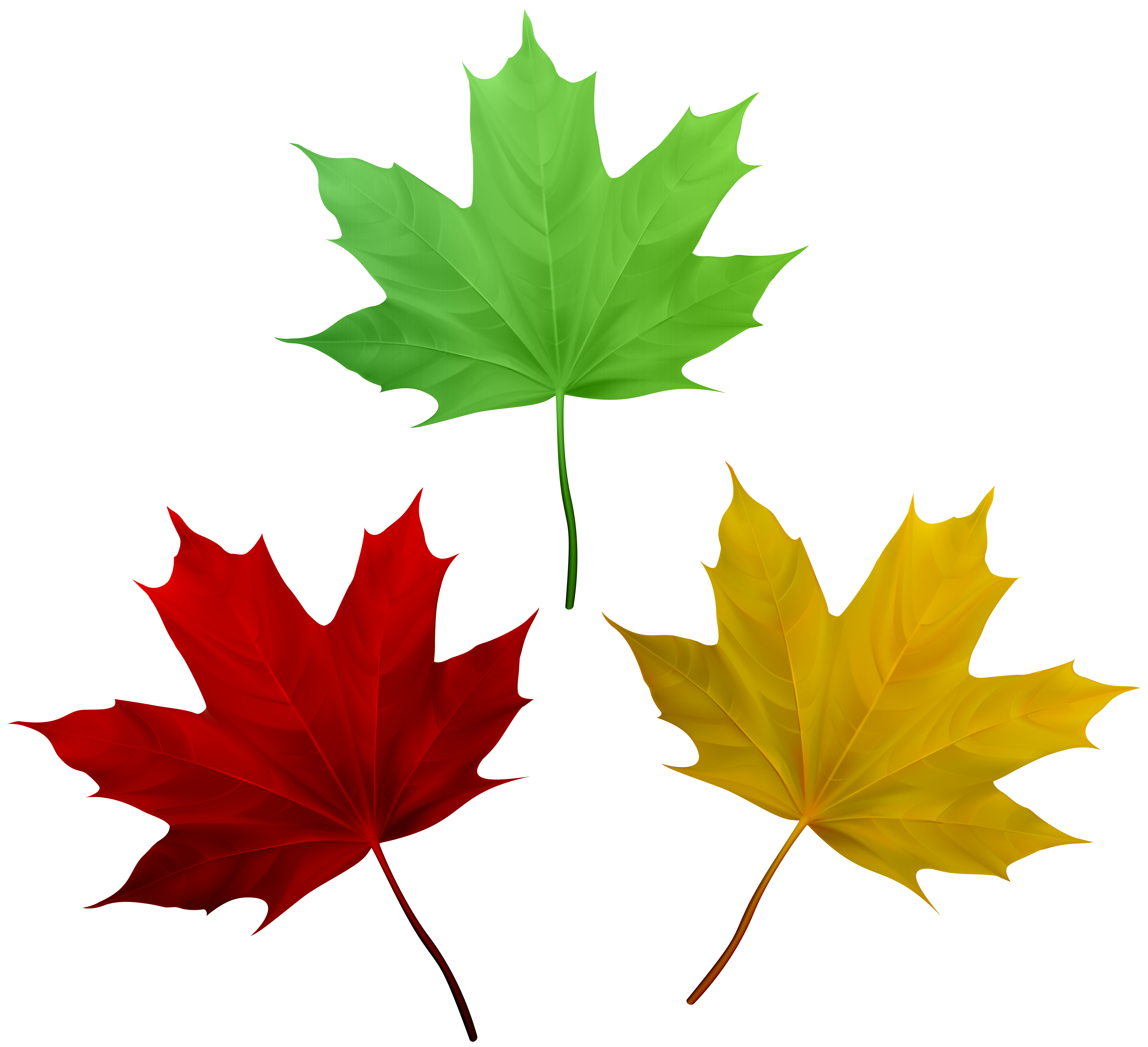 Fall leaves set png. Watermelon clipart leaf