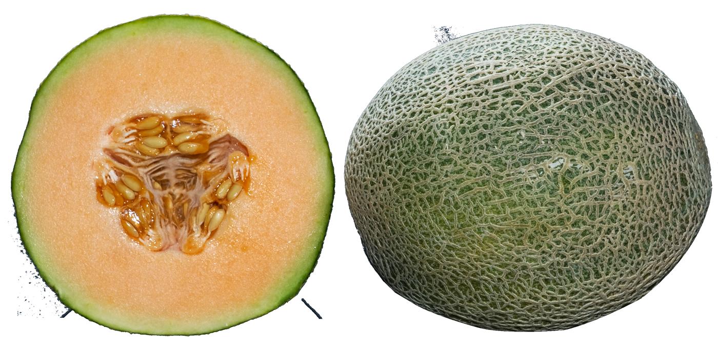 Whole and half cantaloupe. Watermelon clipart muskmelon