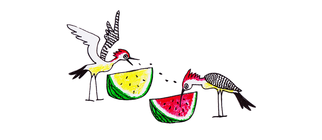 Watermelon clipart seedless watermelon. More or less entirely