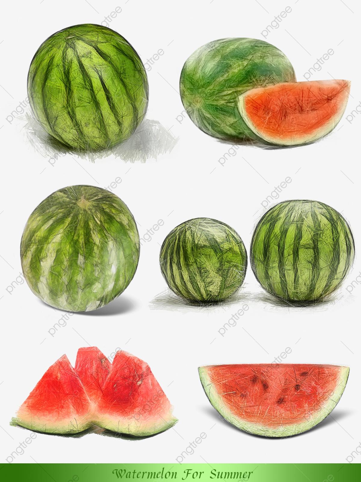 Watermelon clipart sihat. Enam elemen komersil tembikai