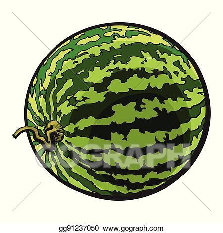 Vector art perfect striped. Watermelon clipart whole